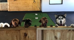 Grab A Drink With Man's Best Friend At Barks 'N Brews Doggy Daycare And Dog Bar In Nebraska