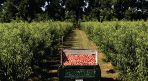The 2020 Peach Truck Tour Will Bring The Most Mouthwatering Fruit Right To Tennesseans This Year