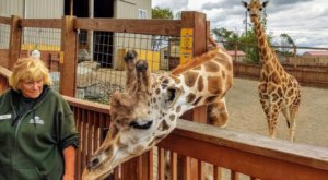 Adventure Awaits At This Drive-Thru Safari Park In New York
