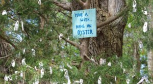Hang An Oyster Shell And Make A Wish At The Wishing Tree On The Vereen Memorial Gardens Loop Trail In South Carolina