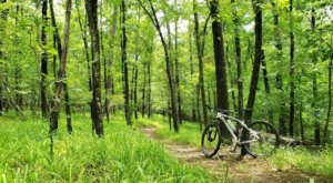 Take This Biking Trail Suited For All Skill Levels That Covers 20 Miles Of Gorgeous Arkansas Forest
