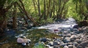Enter A Rainforest Jungle At West Clear Creek Wilderness In Arizona