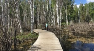 Explore This Boardwalk Trail Through The Boreal Forest In Alaska