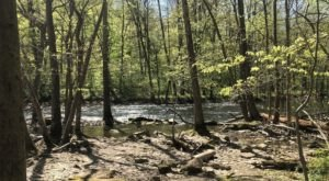 Hike To A Remote Forest Gorge On The Hemlock Gorge Trail, A Secluded Ohio Adventure