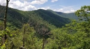 Hike The Historic Wagon Train Trail Surrounded By Lush Forest In Georgia's Brasstown Wilderness