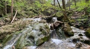 The Shirley Miller Wildflower Trail In Georgia Will Lead You Straight To A Hidden Waterfall