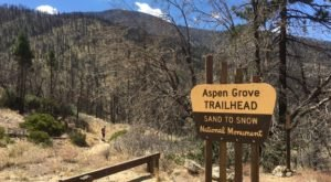 The 4-Mile Aspen Grove Trail In Southern California Takes You Through The Enchanting San Bernardino National Forest