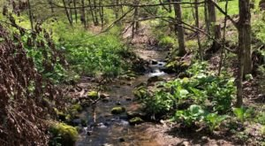 Explore A 2-Mile Loop Through Shimmering Cascades At Brian E. Tierney Preserve In Connecticut