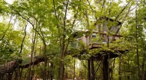 Sleep High Up In The Forest Canopy At Eufaula Treehouse Tree-Sort In Oklahoma