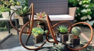 Find All Sorts Of Succulents At Urban Orchid In Cleveland's Hinge Town And Little Italy