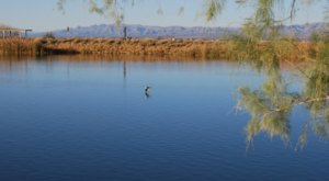 The Water Is A Brilliant Blue At Roper Lake, A Refreshing Roadside Stop In Arizona