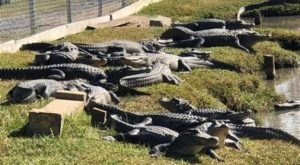 Safely Explore Gator Country In Texas On A Private Social Distancing Tour