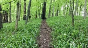 Hiking At Jefferson Memorial Forest In Kentucky Is Like Entering A Fairytale