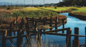 Few Southern Californians Have Explored The Ballona Freshwater Marsh, A Hidden Natural Wonder Inside The Wetlands Ecological Reserve