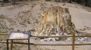 At Over 34 Million Years Old, Some Of The Oldest Trees In The World Are Found In Colorado