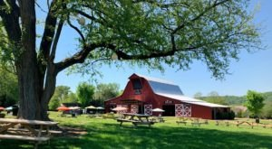 Enjoy A Summer Picnic With A View At Scenic Arrington Vineyards Just Outside Of Nashville