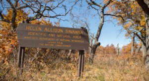 See Minnesota As It Was Centuries Ago When You Visit The Rare, 80-Acre Helen Allison Oak Savanna