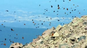 Every Summer, Millions Of Butterflies Visit Lassen Peak In Northern California And It's A Surreal Sight