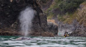 Get Up Close To Whales And Wildlife On The Trinidad Bay Kayak Tour In Northern California