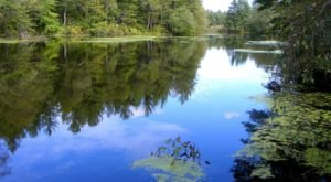 At Only 6-Feet Deep, Forge Pond Is One Of The Most Unique Bodies Of Water In Massachusetts