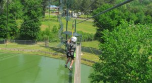 Fly Over Gators In This Thrilling Zip Line At Gators & Friends In Louisiana