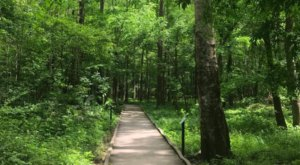 With A Nature Center And Boardwalk Trails, The Louisiana State Arboretum In Louisiana Is Downright Enchanting
