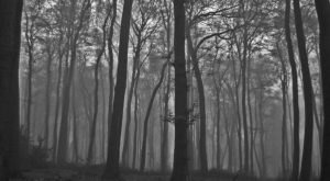 The Ghost Stories About Blue Mist Road In Pittsburgh Will Keep You Up At Night