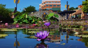 The Colorful Blooms At Maryland's Carroll Creek Park Are One Of The Best Things About Summer