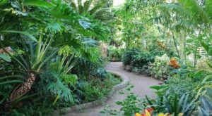 Enter A Rainforest Jungle Right Here In Indiana At Garfield Park Conservatory