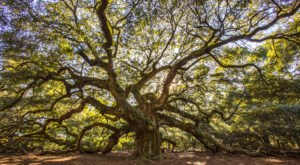 South Carolinians Will Never Forget Their First Time Visiting Angel Oak In South Carolina