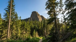 Walk Among Some Of The Tallest Trees In South Dakota At Custer State Park