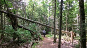 Immerse Yourself In A Magical Old-Growth Forest At Estivant Pines Nature Sanctuary In Michigan