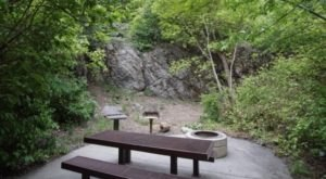 Enjoy A Summer Picnic In The Woods In Utah's Big Cottonwood Canyon