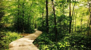 Take A Boardwalk Loop Trail At Lawrence Woods For An Underrated Ohio Adventure