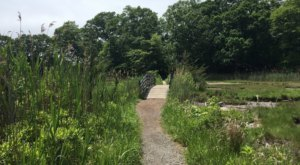 Walk Through Vibrant Woodland Landscapes On The Rocky Neck State Park Loop In Connecticut