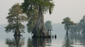 Full Of Water And Cypress Trees, The Great Dismal Swamp Wildlife Refuge In Virginia Is A Marshy Paradise