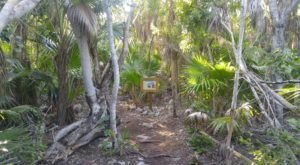 Enter A Tropical Forest Right Here In Florida At Curry Hammock State Park