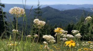 Walk Along The Cone Peak Trail In Oregon To Catch The Wildflowers That Bloom Every Summer