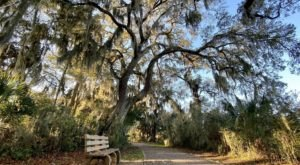 The Jekyll Island Bike Trail In Georgia Is Filled With Blossoming Wildflowers & Ocean Views