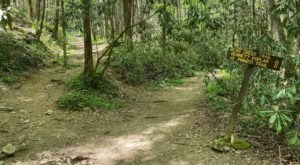 Hiking Bear Creek Trail In Georgia Will Feel Like You've Been Transported To The Rainforest