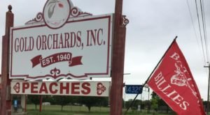Enjoy Hand-Spun Peach Ice Cream And Mouthwatering Pies At Gold Orchards In Texas