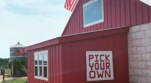 Pick Some Of The Juiciest Peaches In Texas This Summer At Jenschke Orchards