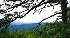 Feel Like The Only Person In The World When You Wander Within Dry Creek Wilderness In Arkansas