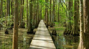The 17-Mile Loop Trail At Chicot State Park Will Lead You On An Enchanting Emerald Adventure