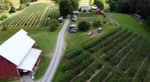 It's Blueberry Time At These 2 You-Pick Berry Farms In West Virginia