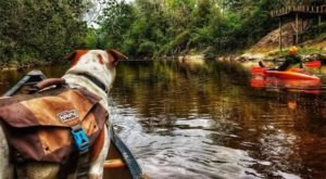 Thanks To Mississippi's Black Creek Canoe Rental, You Can Enjoy A Scenic Ride Through De Soto National Forest