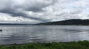 An Ancient Forest Lies Beneath The Surface Of Lake Sammamish In Washington