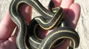 Snake Sightings Are Expected To Drastically Increase Across Texas This Summer