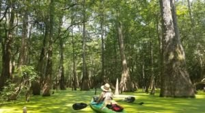 Kayak The Honey Island Swamp In Louisiana For A Scenic, Relaxing Adventure