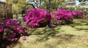 Immerse Yourself In Thousands Of Vibrant Blooms On Mississippi's Three Different Crepe Myrtle Trails